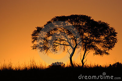 African Tree Sunset Silhouette