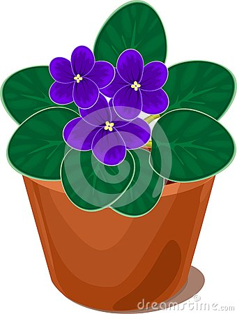 Free African Violet Flower In Pot Royalty Free Stock Photos - 63565928