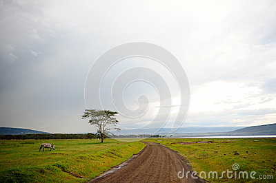 African wilderness landscape