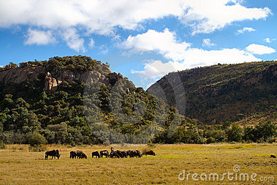 African wildlife parks