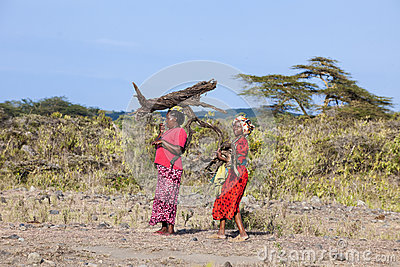 African women collecting firewood Editorial Stock Image