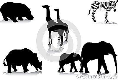 Africas animals