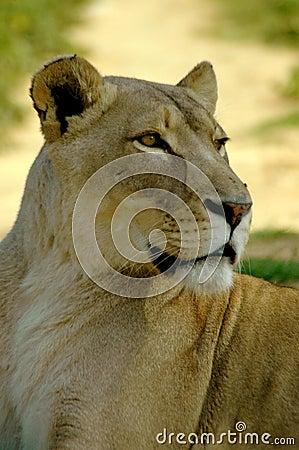 Africas Wildlife