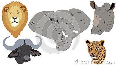Afrikanische große fünf Köpfe