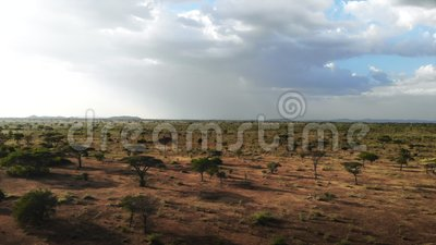 Afrikansk Savannah f?r safarilopp Flyg- landskap f?r gr?ssl?tt f?r l?ngd i fot r?knatvildmarksavannah i den Serengeti nationalpar stock video
