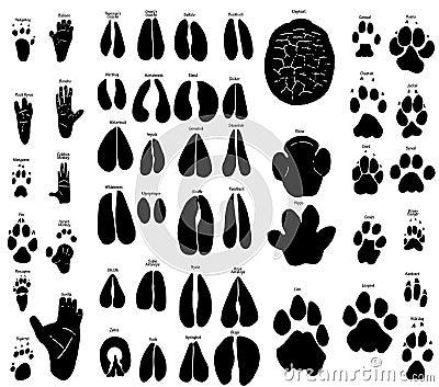 Afrikanska djura spår