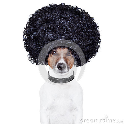 Free Afro Look Hair Dog Funny Royalty Free Stock Image - 27235916