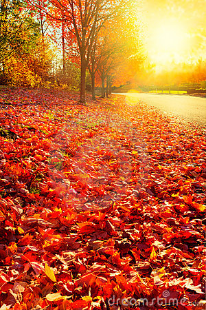 Free Afternoon Sun On Fall Leaves Royalty Free Stock Photos - 22028418