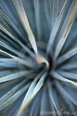 Free Agave Abstract Royalty Free Stock Photos - 23444598