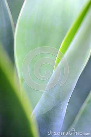 Free Agave Plant Stock Photography - 39273732