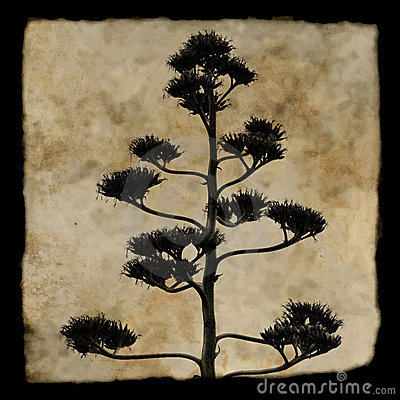 Free Agave Plant Silhouette Stock Photography - 11711302