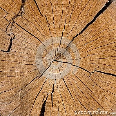 Aged bark