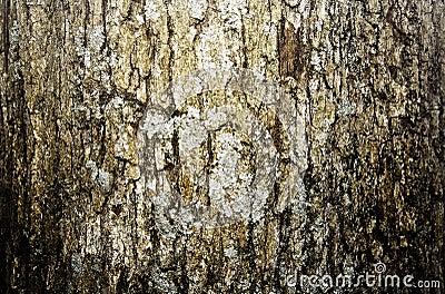 Aged tree bark