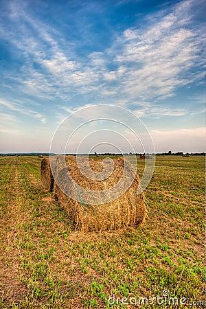 Agiculture scene nature hay