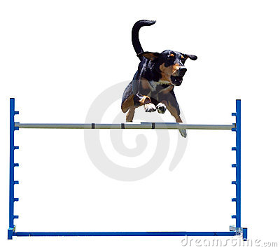 Free Agility Dog Over A Jump Stock Images - 7236864