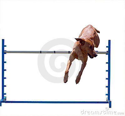 Free Agility Dog Over A Jump Royalty Free Stock Image - 7237646