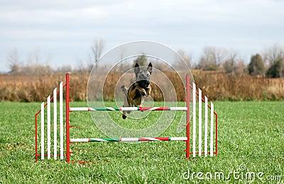 Agility jump