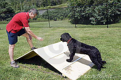 Agility Training - Portuguese Water Dog