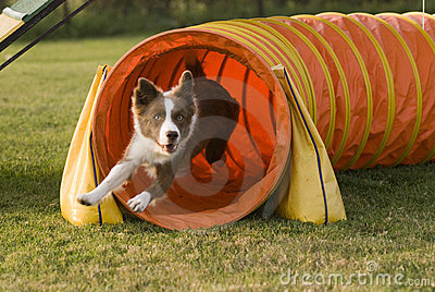 Agility tunnel-2
