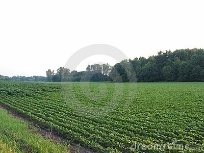 Agosto Beans-058
