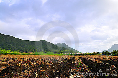 Agricultural Land at Mauritius