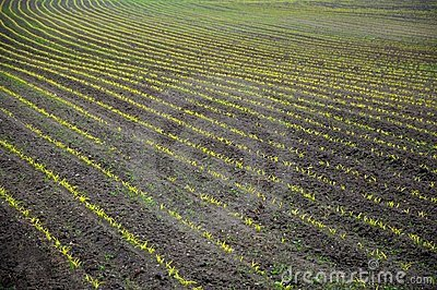 Agricultural landscape