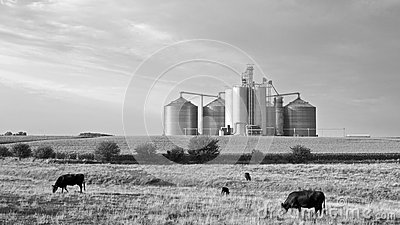 Agricultural Landscape in Black & White