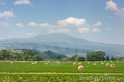 Agricultural landscape of hay bales