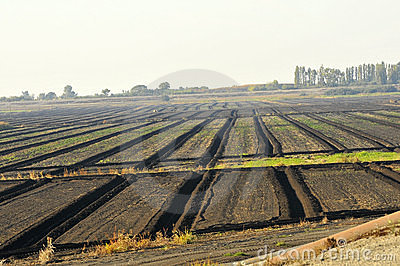 Agricultural Planting Fields