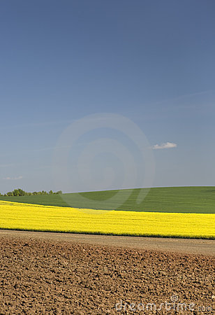 Free Agricultural Scenery Stock Photography - 5455062