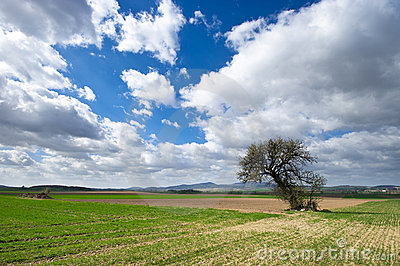 Agricultural view with tree