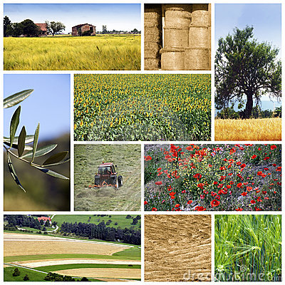 Free Agriculture Collage Royalty Free Stock Image - 16455366