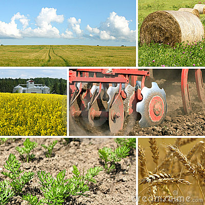 Free Agriculture Collage Royalty Free Stock Image - 18919946