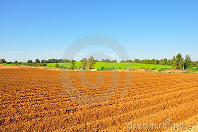 Agriculture Crop Fields
