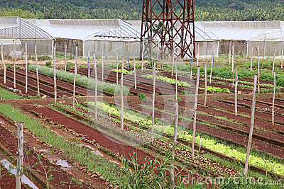 Agriculture in Cuba