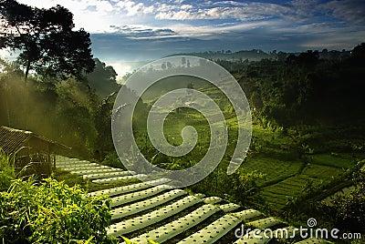 Agriculture Farmfield