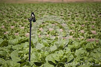 Agriculture and farms - bird on a sprinkler
