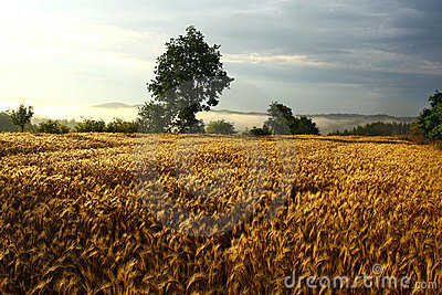 Agriculture field during sunset