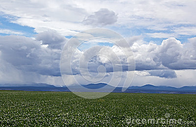 Agriculture Field Under Stormy Skies