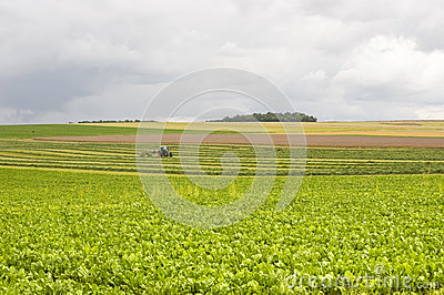 Agriculture in France
