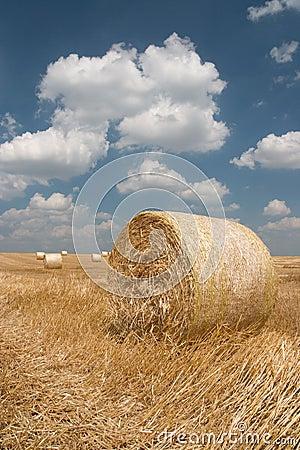 Agriculture - Haystack