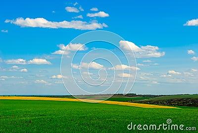 Agriculture rape field