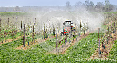 Agriculture, spraying of trees