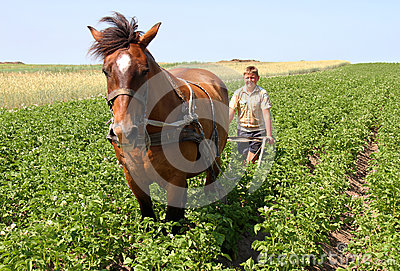 Agriculture Editorial Stock Image