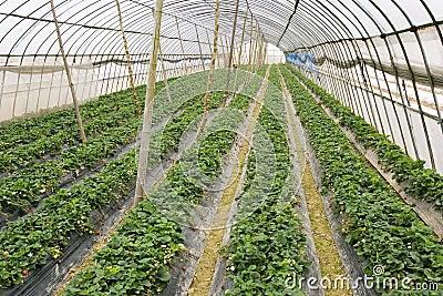 Agriculture tent farm