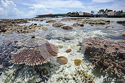 Agua cristalina en la isla Malasia de Mabul Foto editorial
