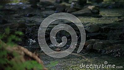 Agua que se derrama sobre rocas del río almacen de video