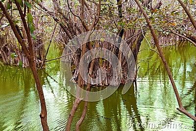 Aguada cenote in mexico Mayan Riviera jungle
