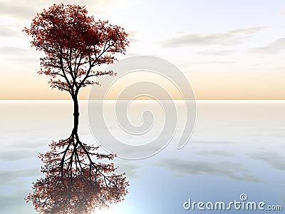 Ahornholz-Baum