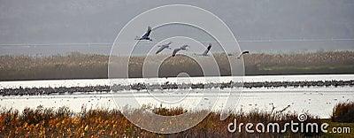 Ahula ptaków formacja Israel